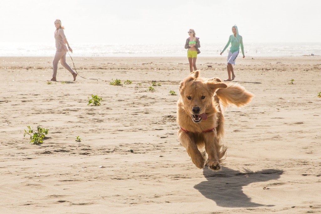 Pet Friendly Areas in San Diego