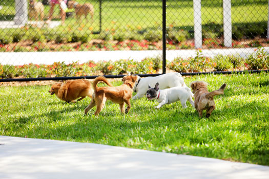 Little Italy Residents can Look Forward to a New Dog Park