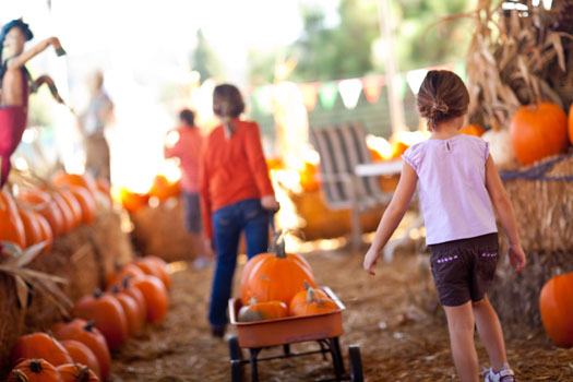 4 Must-Do Autumn Activities in Downtown