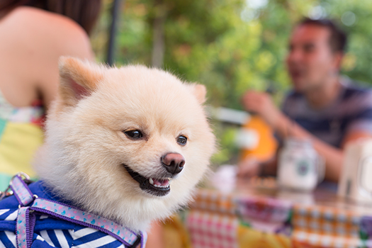 Great Dog-Friendly Breakfast Joints in San Diego