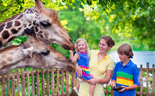 5 Reasons You Should Take Your Kids to the San Diego Zoo This Year