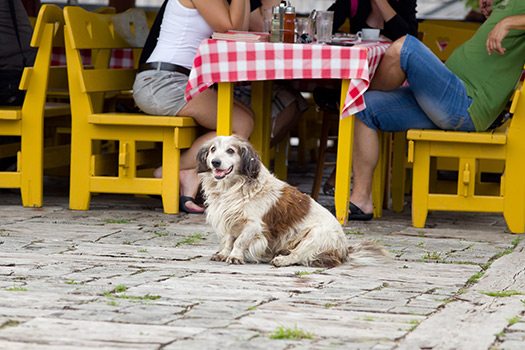 Essential Etiquette for Dog-Friendly Parks & Restaurants