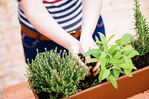 10 Herbs to Grow If You Live in a Condo