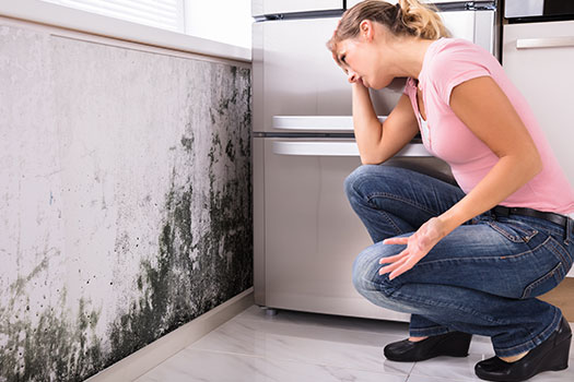 Steps to Take If You Find Mold in Your Home