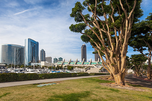 Top Spots for Running in San Diego's Downtown Districts